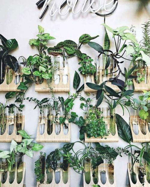 Imagen de Maranta Planta de interior junto a otras plantas