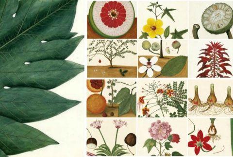 Regalo Agenda Real Jardín Botánico