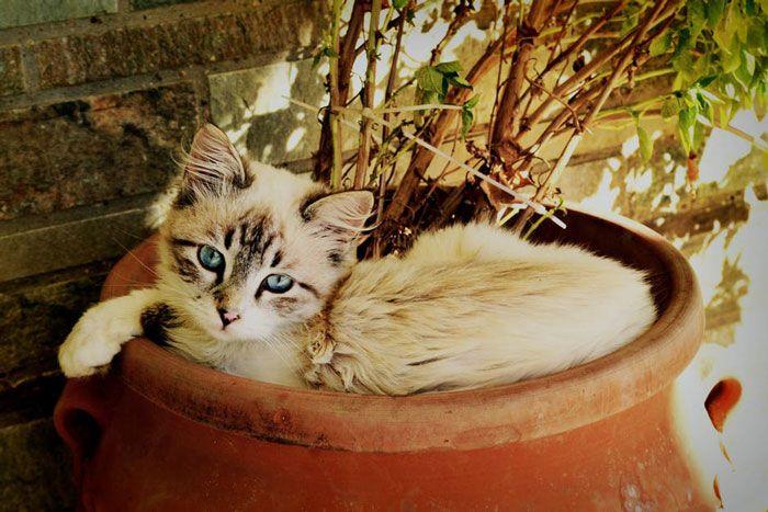 Gato tumbado en una maceta con planta