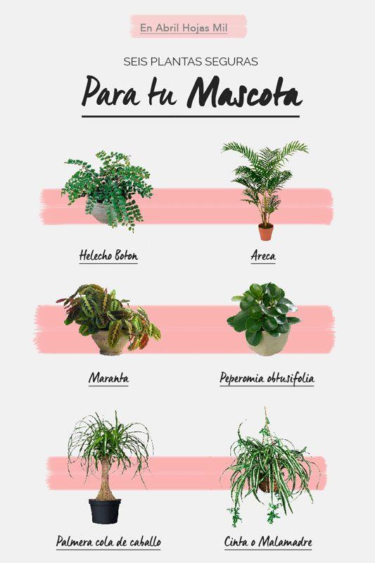 Resumen plantas para mascotas