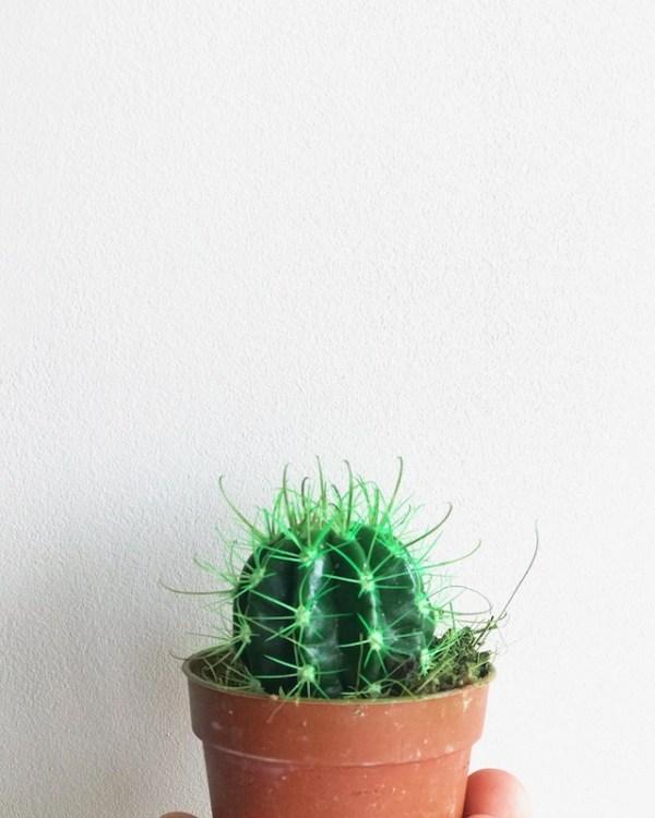 cactus de color verde