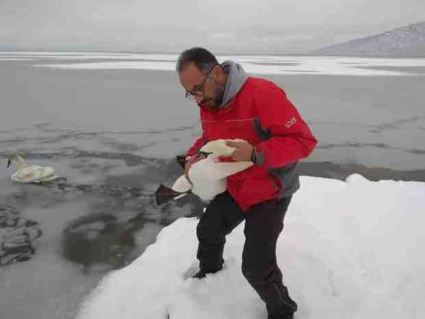 Εθελοντές σώζουν παγιδευμένα πουλιά από την παγωμένη λίμνη της Καστοριάς (φωτογραφίες)