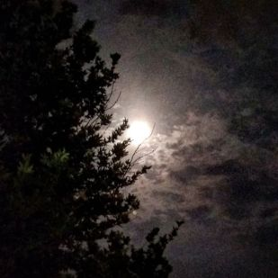 moonlit in pubpara