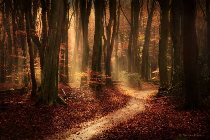 Forest Photography - Beautiful Photos of Woods in the Netherlands 29