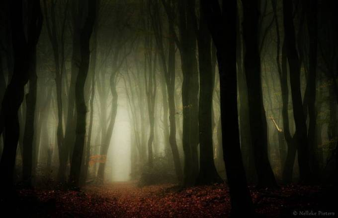 Forest Photography - Beautiful Photos of Woods in the Netherlands 30