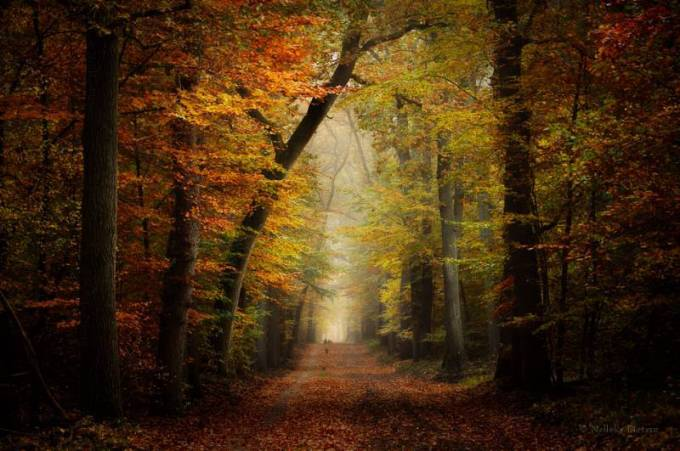 Forest Photography - Beautiful Photos of Woods in the Netherlands 3