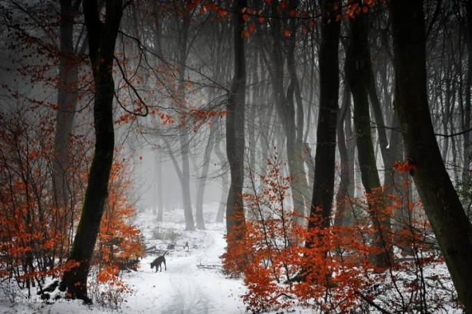 Forest Photography - Beautiful Photos of Woods in the Netherlands 26