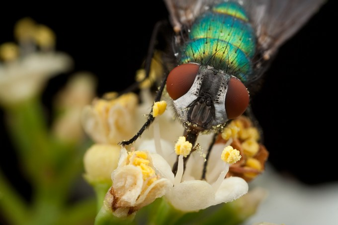 Macro Photography by Alistair Campbell-12