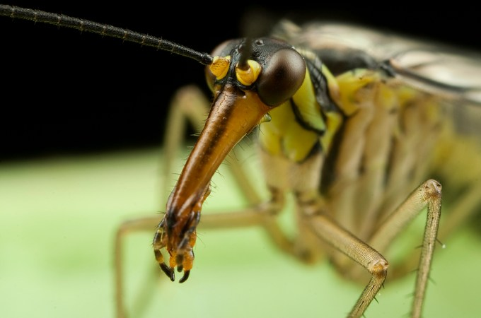 Macro Photography by Alistair Campbell-13