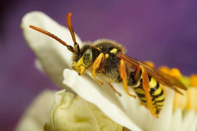 Macro Photography by Alistair Campbell-14