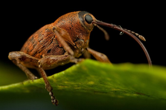 Macro Photography by Alistair Campbell-19