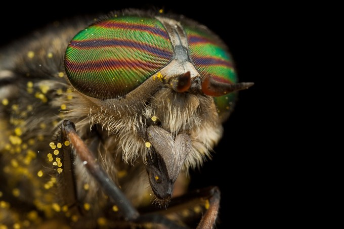 Macro Photography by Alistair Campbell-7
