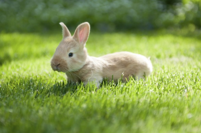A bunny sent from heaven to melt hearts.
