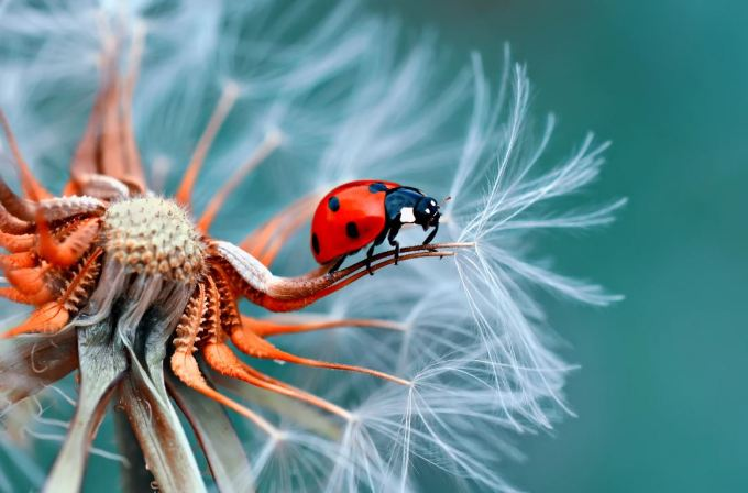 Macro Photography - One of the Most Popular Types of Photography
