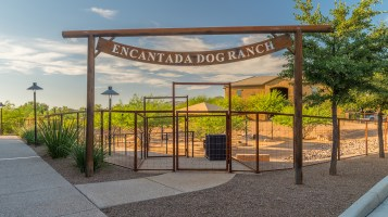 Dove Mountain Dog Ranch 4