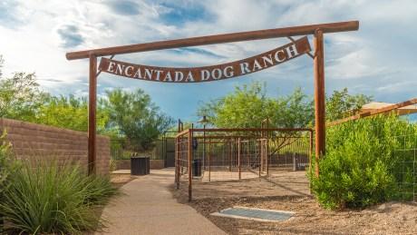 Steam Pump Dog Ranch 4