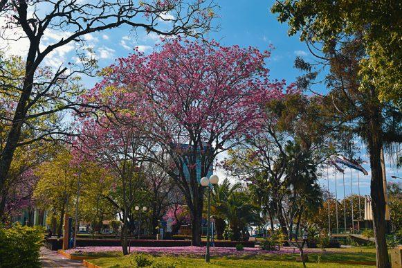 Plaza de Armas (79)