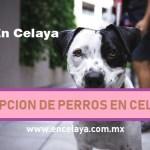 Adopcion de Perros en Celaya