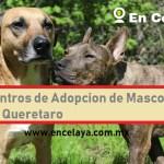 Centros de Adopcion de Mascotas en Queretaro