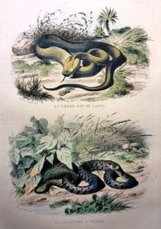 460. LACÉPÈDE. Histoire naturelle. 1839. In-4°.