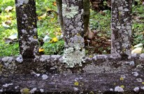 Lichens on the bench.