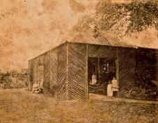 Fernery at 'The Hollow,' Mackay, ca. 1877, by Edmund Rawson.