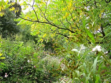 . . . wetlands, meadows, edges of woods, urban gardens.