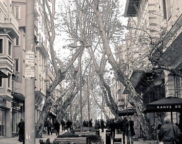 Beautiful leaning plane trees on an avenue near the Grand Bazaar.