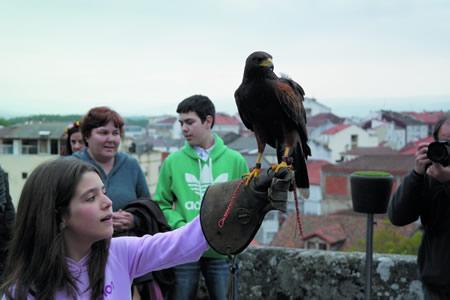 As demostracións de cetrería son un dos grandes atractivos das Feiras Medievais, e tamén terán o seu espazo na I Feira Medieval Guímara de A Pobra do Brollón. (Arquivo EC).
