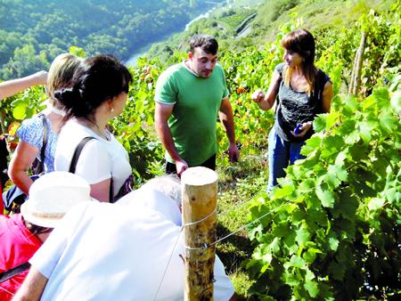 Imaxe de arquivo da primeira edición do Viñobús Vendima.(Foto cedida).