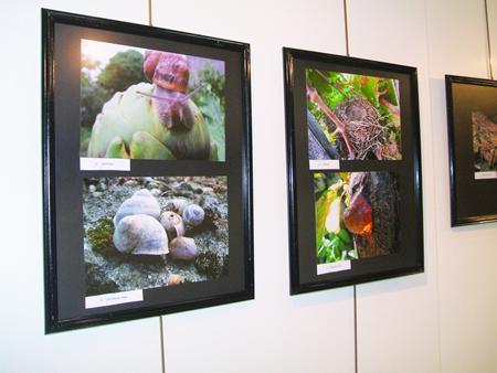 Imaxe de arquivo da exposición integrada polos traballos da pasada edición do concurso Outono Fotográfico, na Casa da Xuventude de Chantada.  Arquivo EC.