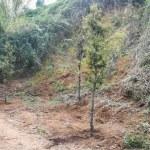 L'Ajuntament planta més de 300 arbres i arbustos al torrent de Can Serra per revegetar la zona