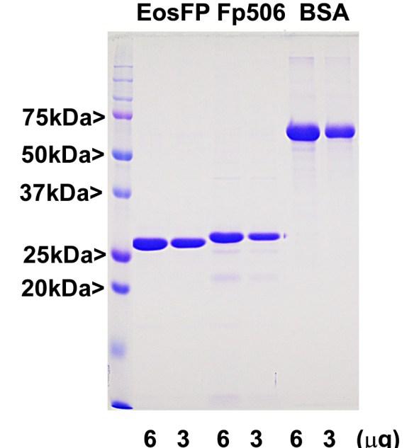 EosFP Protein