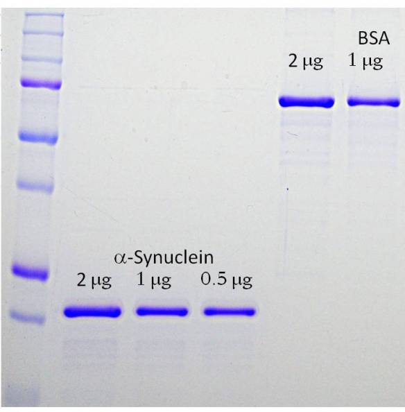 recombinant human α-synuclein