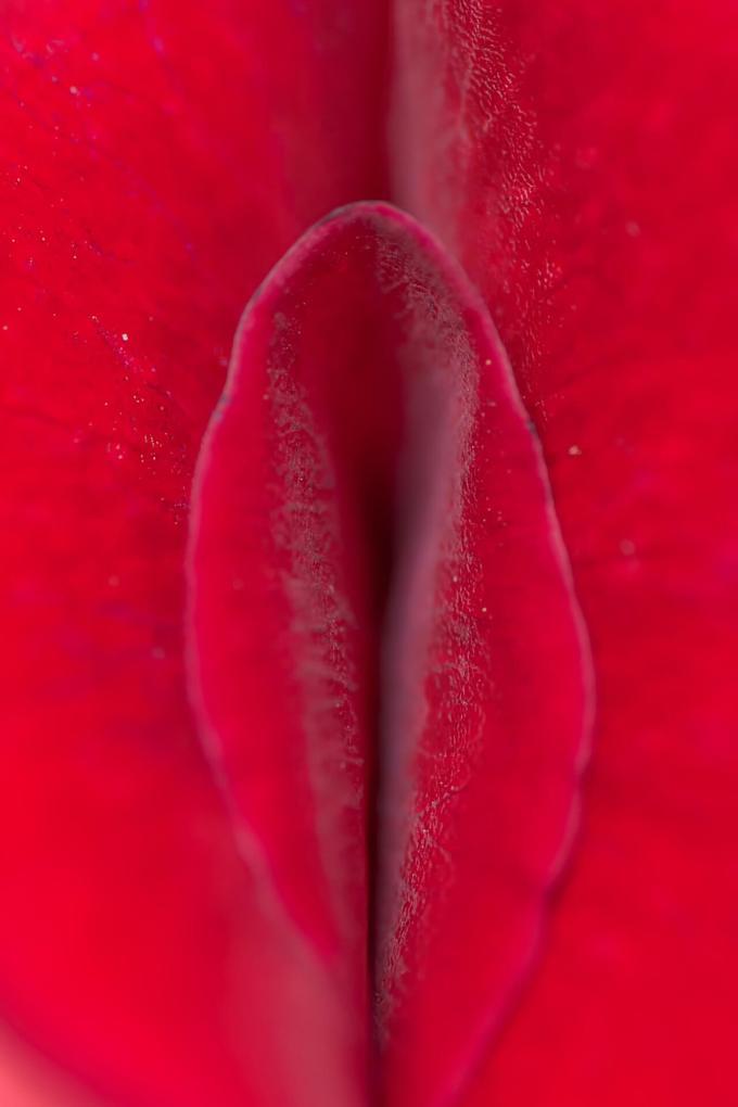 真っ赤に充血した艶かしい花びらは性器みたい!