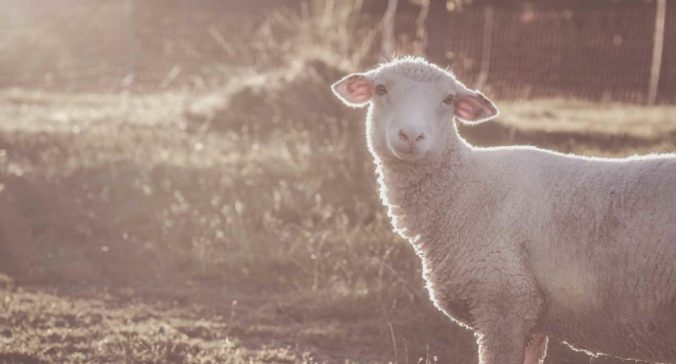 Image result for lamb will be their shepherd