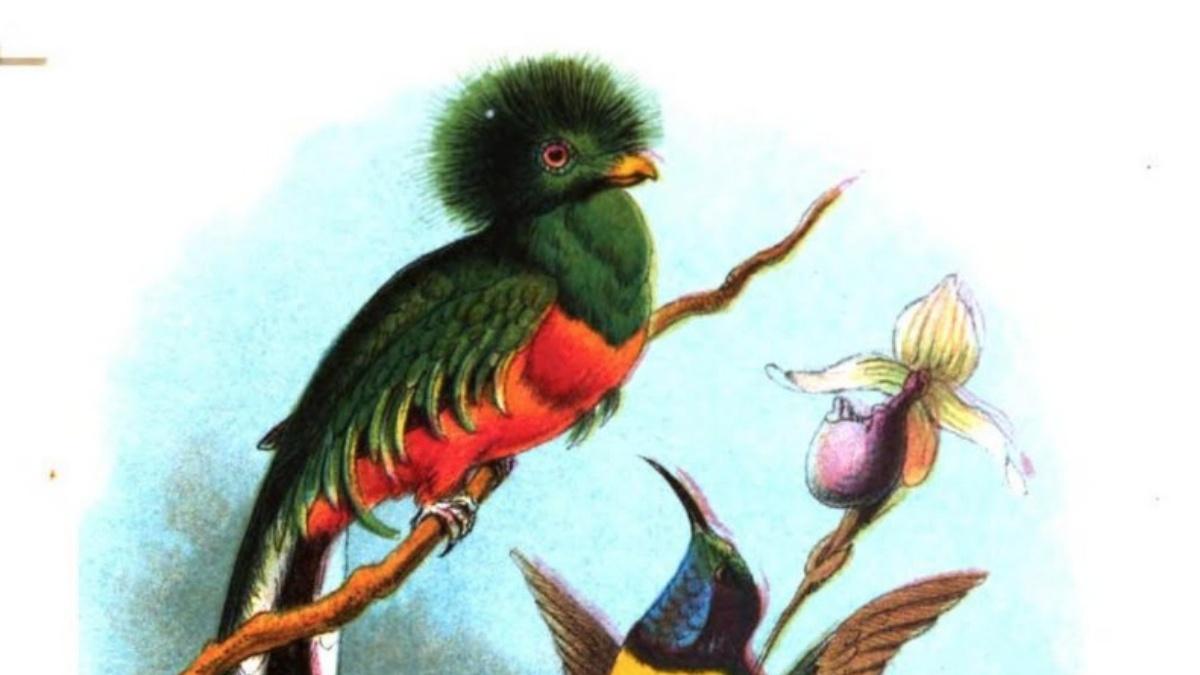 Resplendent Trogon Bird