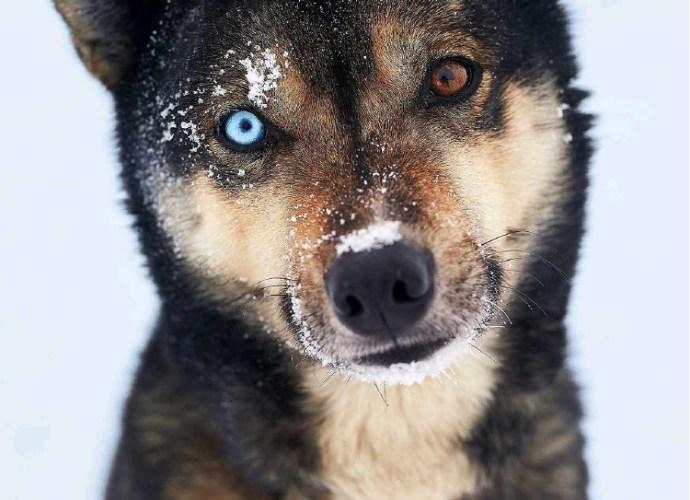 Husky in UK Traveller Lonely Planet Magazine