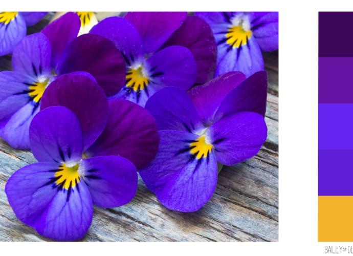 violets colour swatch
