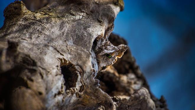 11-finalist-nature-photography-by-jeff-grott