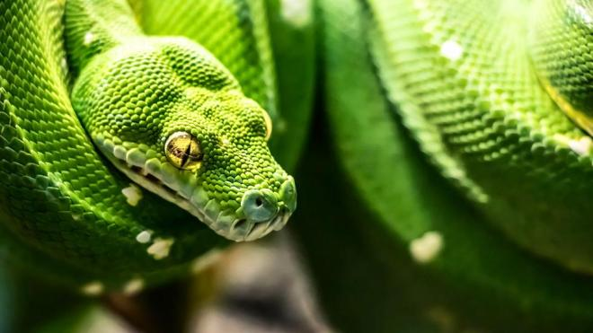13-serpent-nature-photography-by-whitney-ray