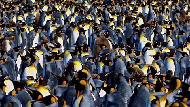20-penguin-nature-photography-by-lawerence-small