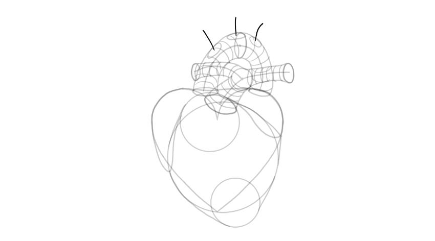 draw branching of aorta