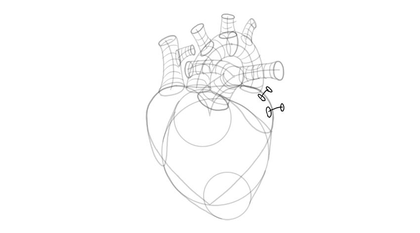 sketch pulmonary veins