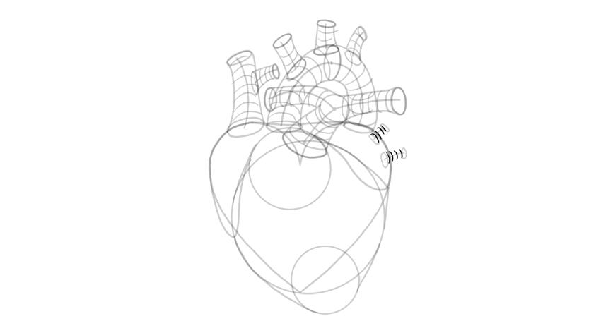 sketch 3d form of pulmonary veins