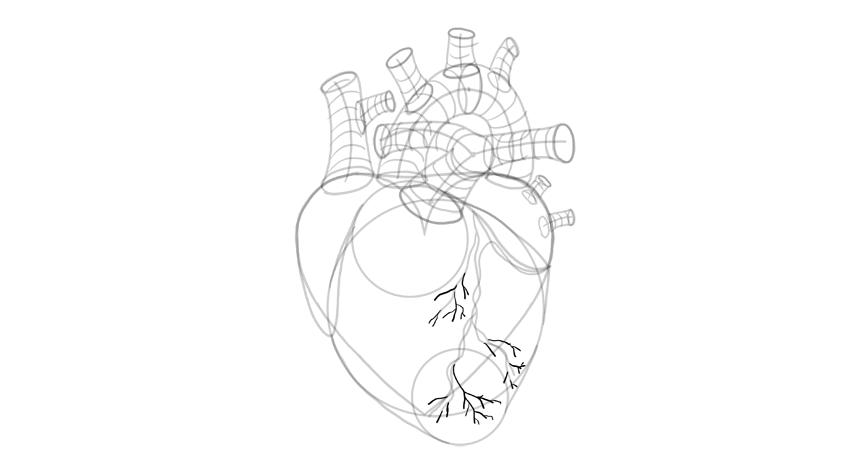 draw the blood vessels