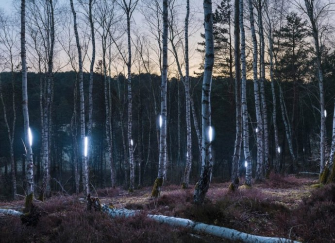 Alexis Pichot Woodland Series