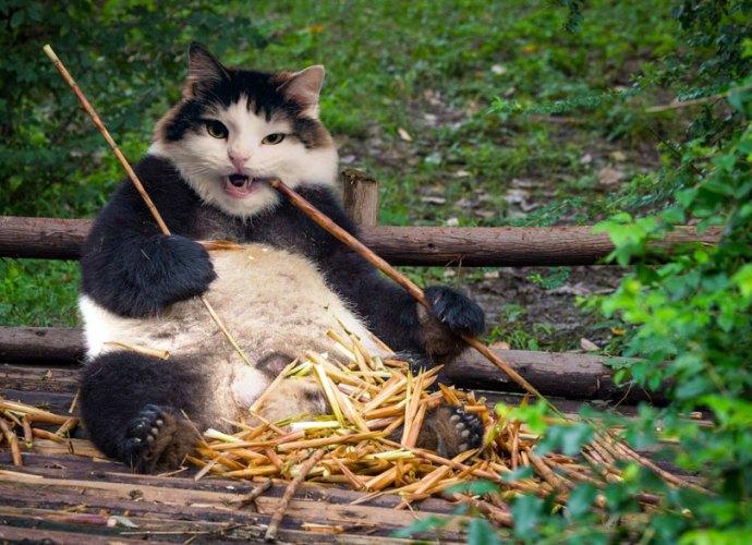 Audrey-Spencer-cats
