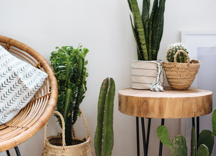 3 Planter ideas when you are too lazy to repot