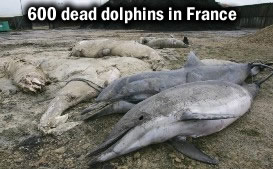 Dead Dolphins in France